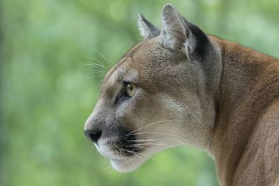 California mom saves son, 5, from mountain lion attack using bare hands